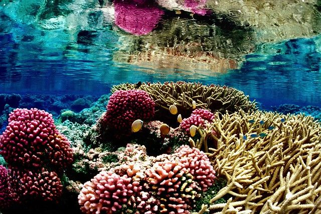 Thirty-Year Study Shows Culprits of Coral Bleaching