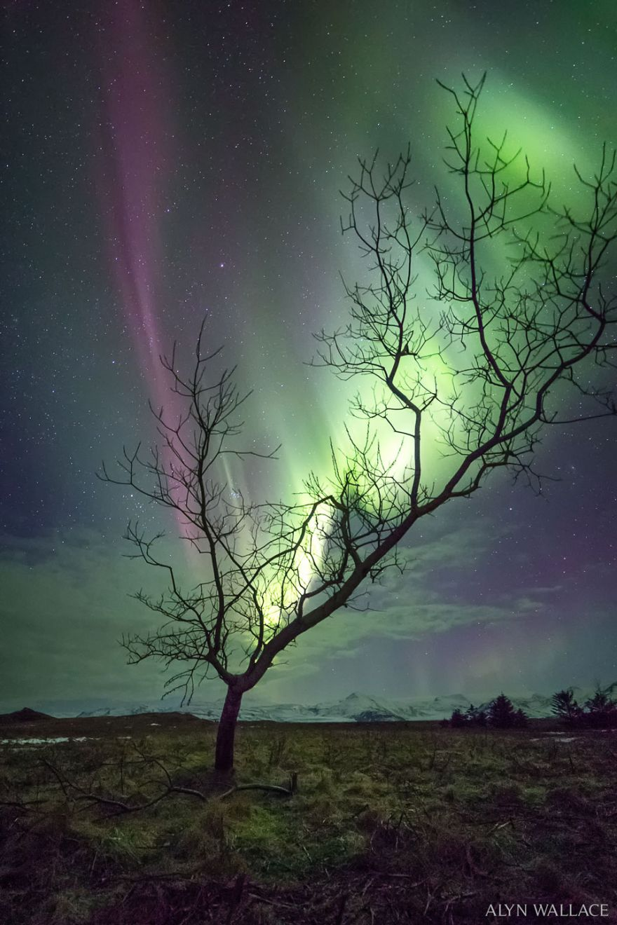It's A Tree But With Aurora For Leaves