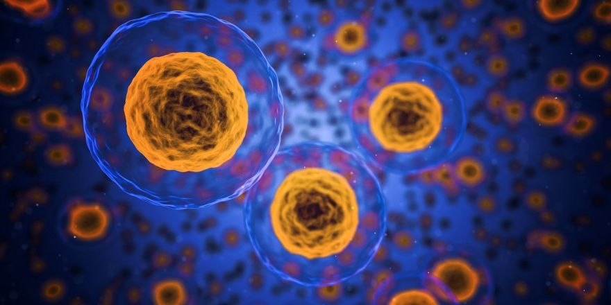 When Old Human Cells Become Youthful Once More