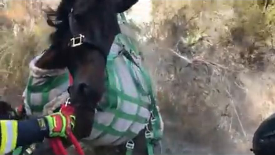 Helicopter Hoists Horse Out Of A 60-Foot Ravine