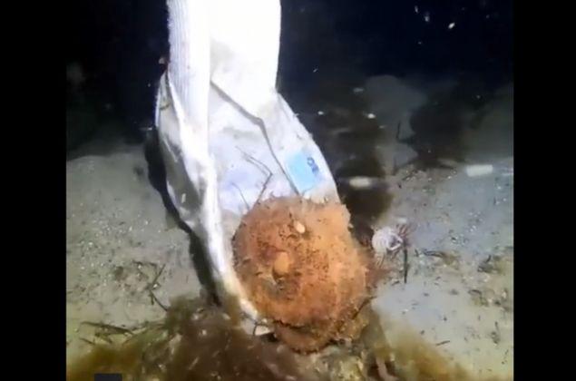 Octopus Tries On A Baseball Cap