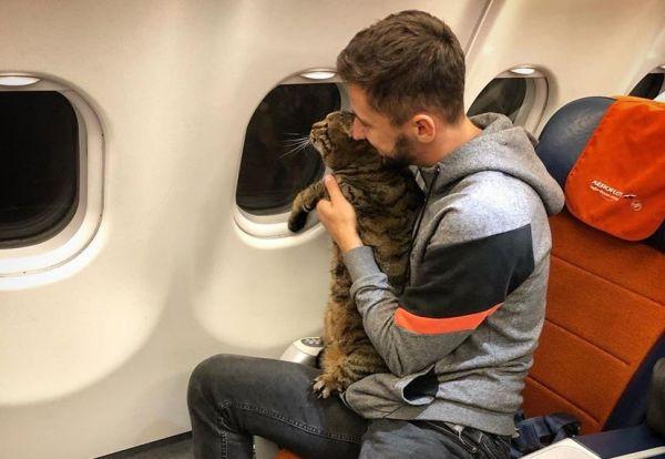 How to Take a 22-pound Cat to Vladivostok
