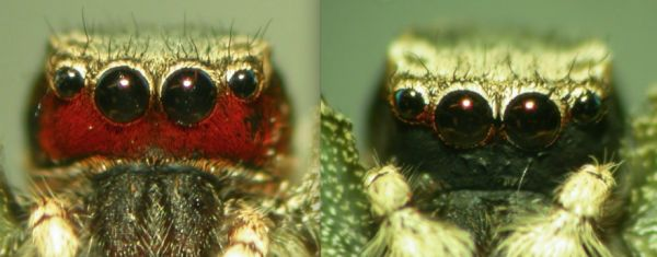 Inside the Lab Where Spiders Put on Makeup
