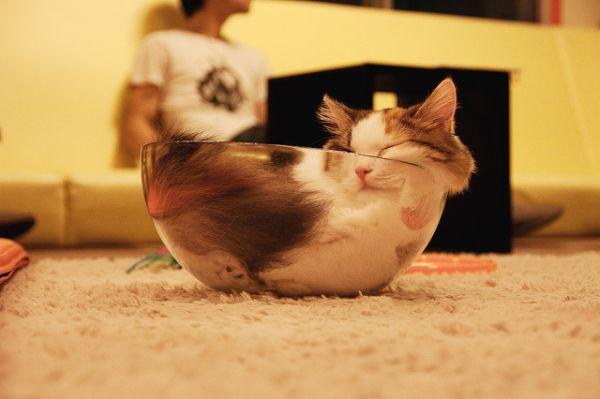 Is a Cat a Liquid? , Neatorama