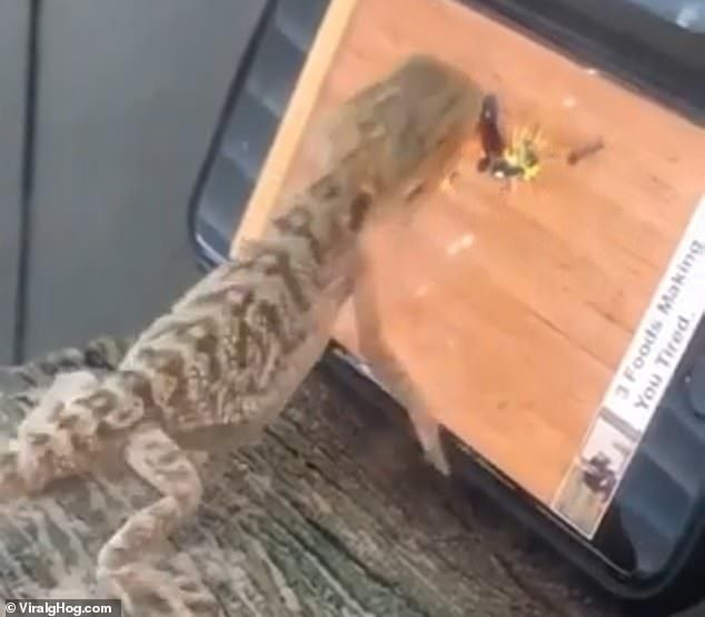 Lizard Catches Virtual Flies