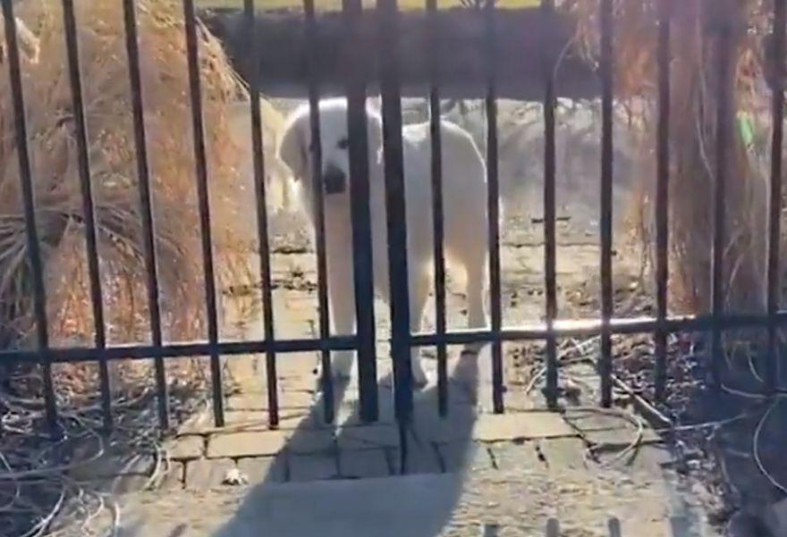 this-old-dog-always-visits-next-door-neighbor