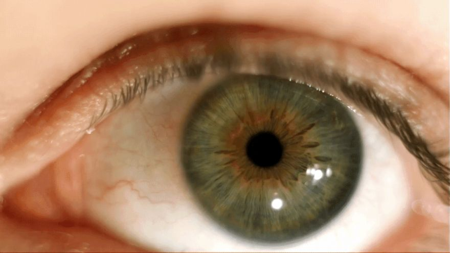 The Science Behind Non-Blurry Vision, In Spite of Constant Eye Movement