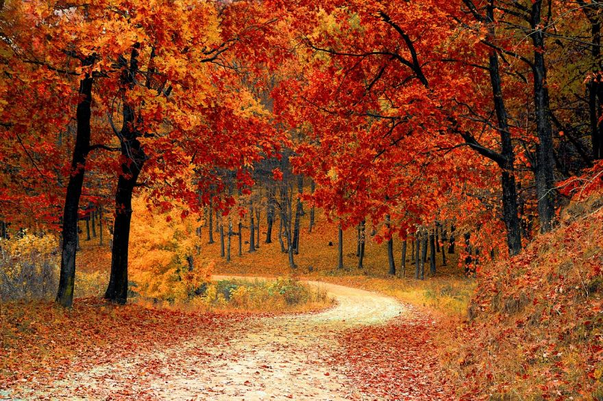 The Science Behind Autumn: Why Leaves Change Color in the Fall