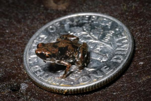 10 species discovered in 2013 neatorama