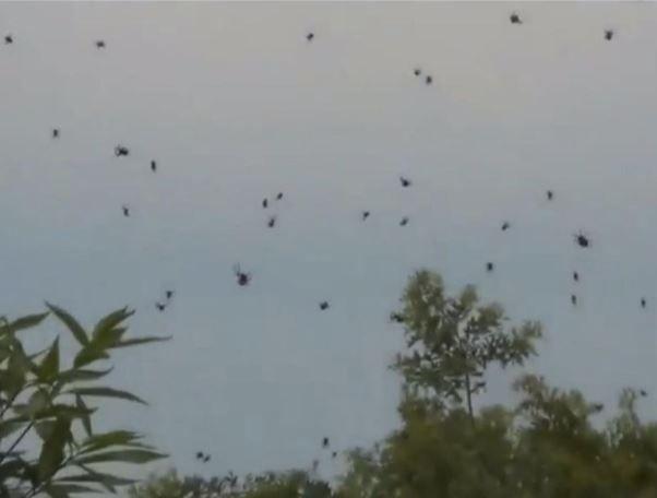 It's Raining Spiders, Hallelujah!