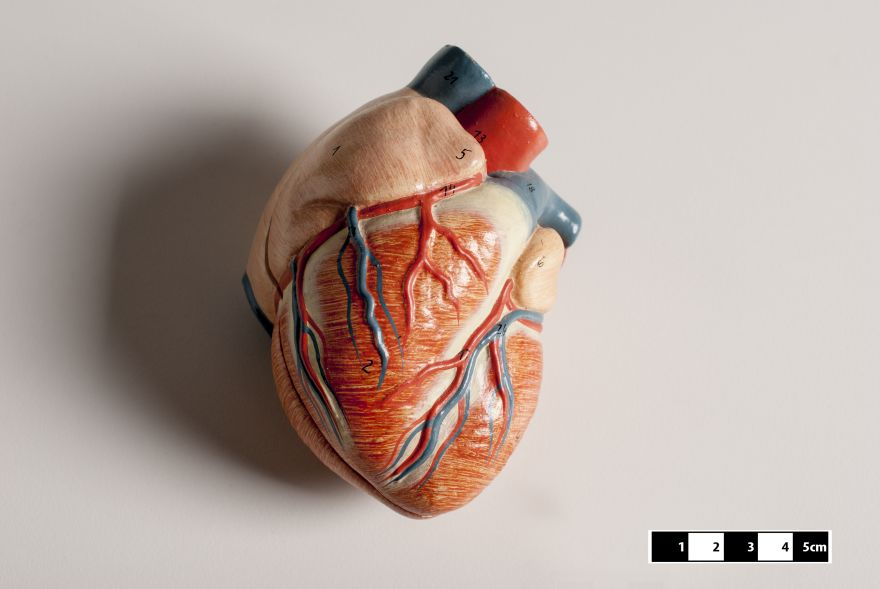 Researchers Have Discovered New Cells That Can Heal The Heart