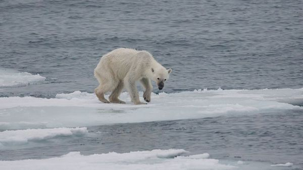 The Poisons Released by Melting Arctic Ice