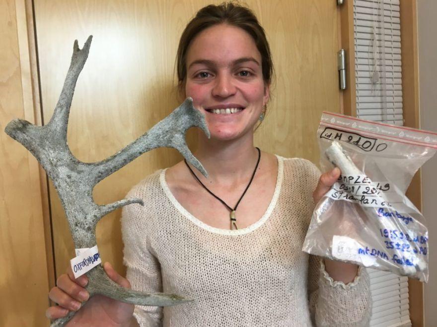 reindeer-population-saved-from-brink-of-extinction