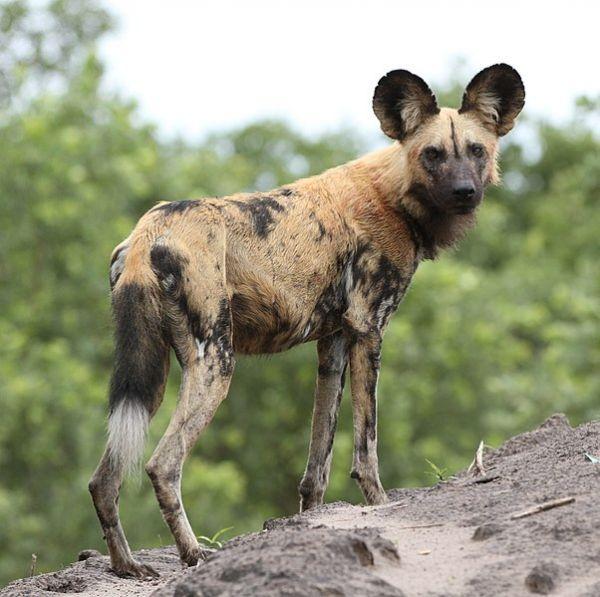 Conservation Africa News -