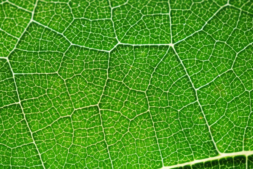 The Key To Photosynthesis Unlocked By Scientists
