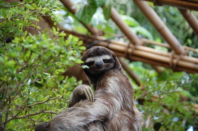 Why Do Sloths Move So Slowly?