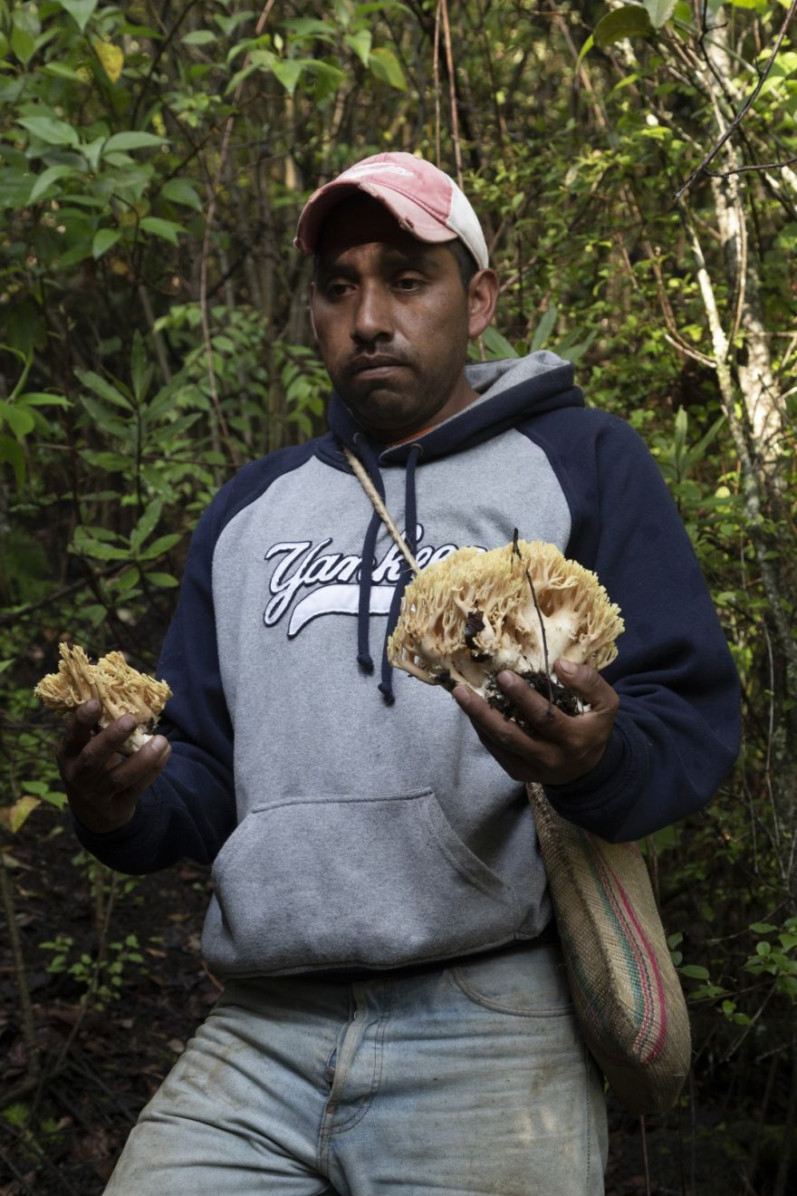 How an Indigenous Community in Mexico Found Strength In Wild Mushrooms