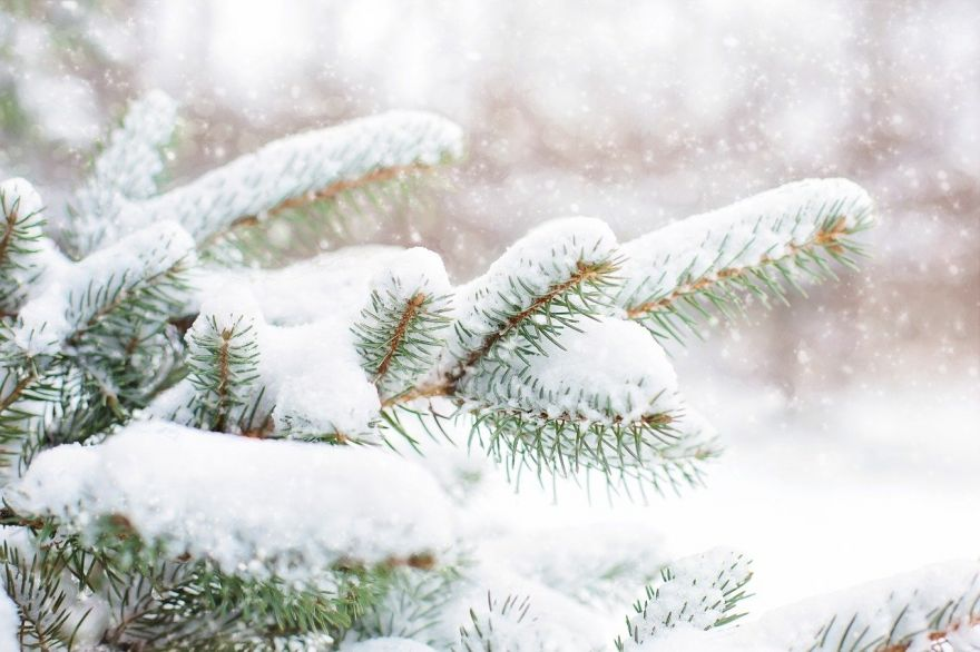 Harvesting Your Own Christmas Tree Instead of Buying One