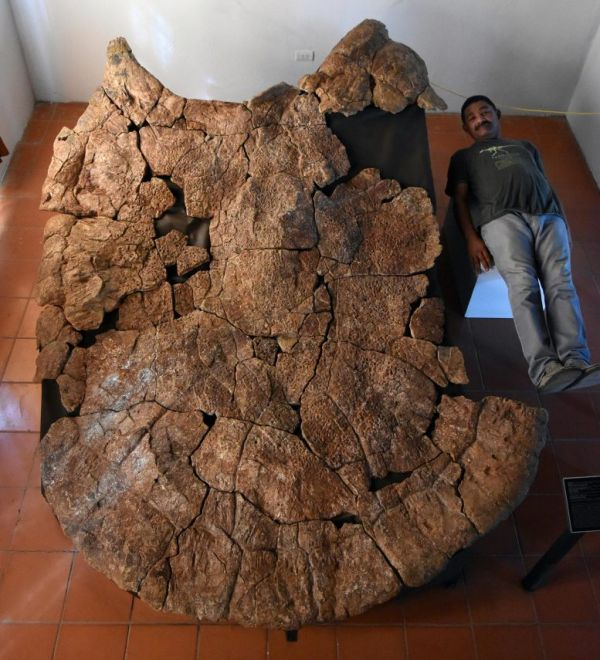 Extinct Turtle Weighed 2,500 Pounds