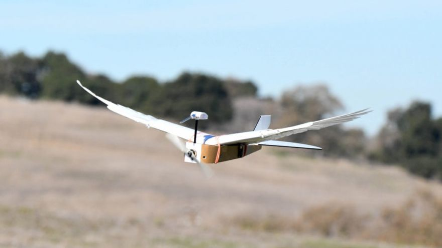 The First Robot That Can Bend Its Wings Like A Real Bird