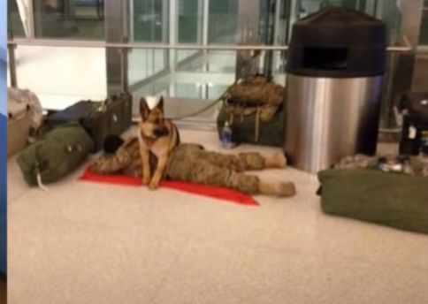 Dog Protects Soldier As He Naps At The Airport