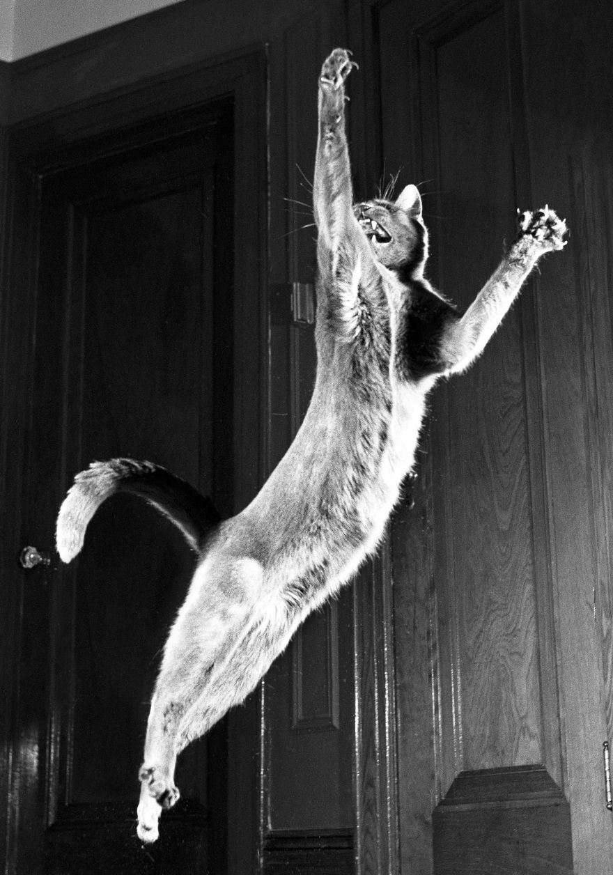 Walter Chandoha's Images of Cats