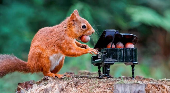 It's A Squirrel Playing Piano