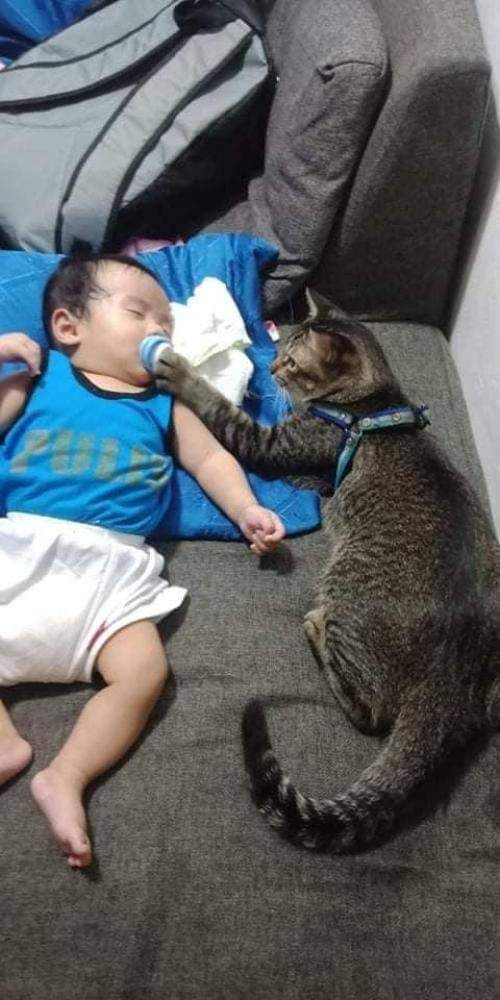 Babysitting Cat