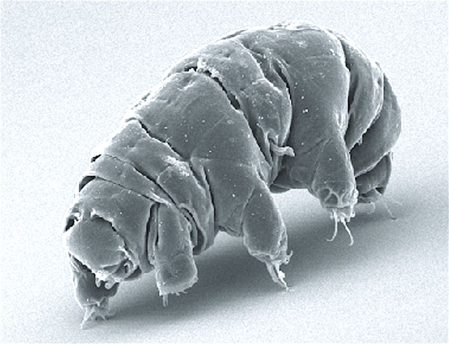 How Tardigrades Defy Death