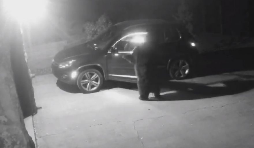 Bear Breaks Into A Car