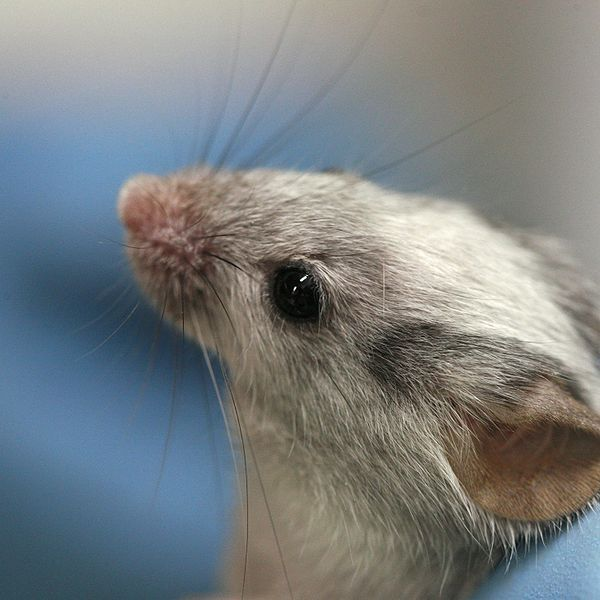 Perceiving The World In The Eyes of A Newly Born Mammal