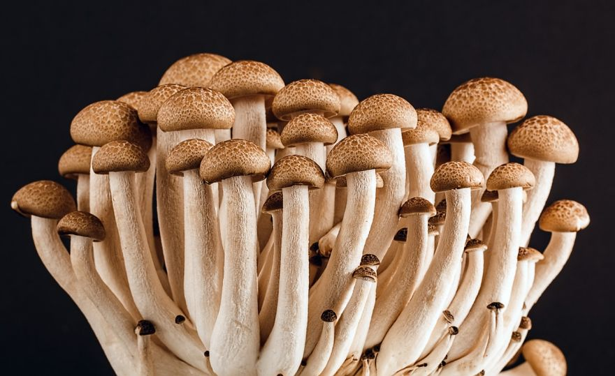 Mushrooms and Sylvia Plath's Poem About Them