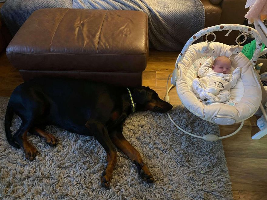 Dog Takes Good Care Of His Newborn Sister