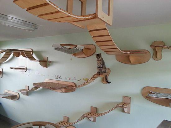 wall furniture for cats neatorama