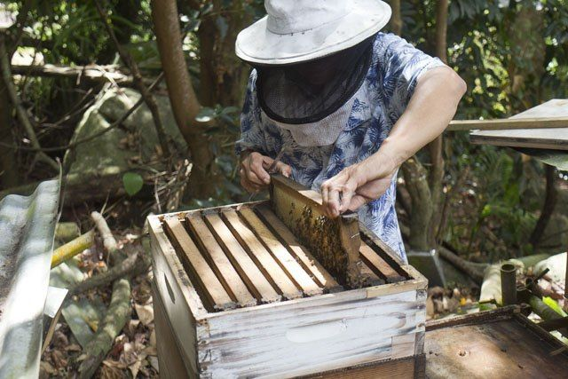 Life Lessons From Beekeepers