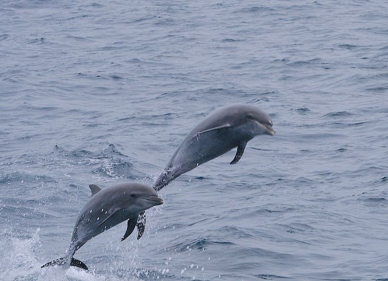 Dolphins That Share Common Interests Are Likely To Spend Time Together, Study Suggests