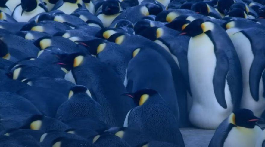 The Amazing Math of The Penguin Huddle