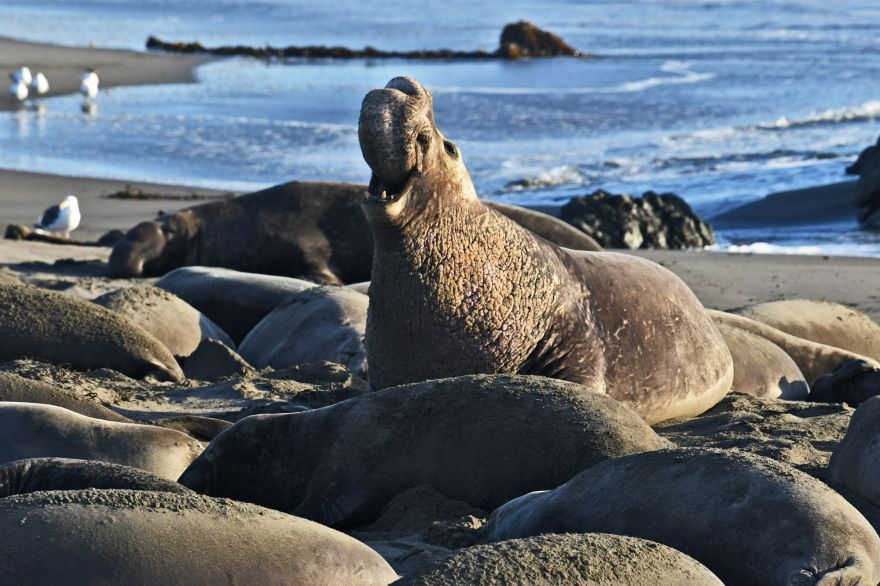 Man Who Shot An Elephant Seal Has Been Sentenced To Prison After Two Years
