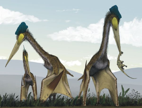 This Pterosaur Supported its Giant Neck with Bones Built like Bicycle Wheels