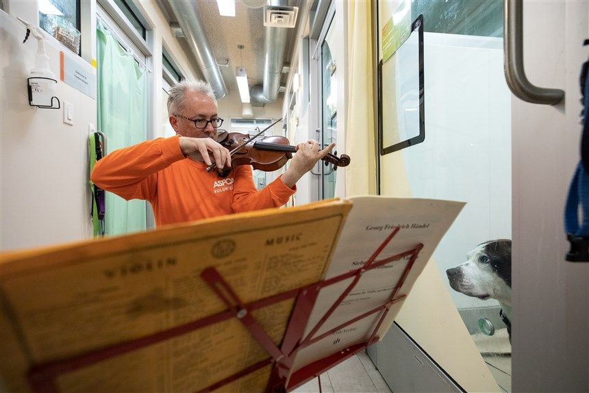Martin Agee Plays His Violin to Comfort Shelter Dogs Who Suffered from Cruelty and Neglect