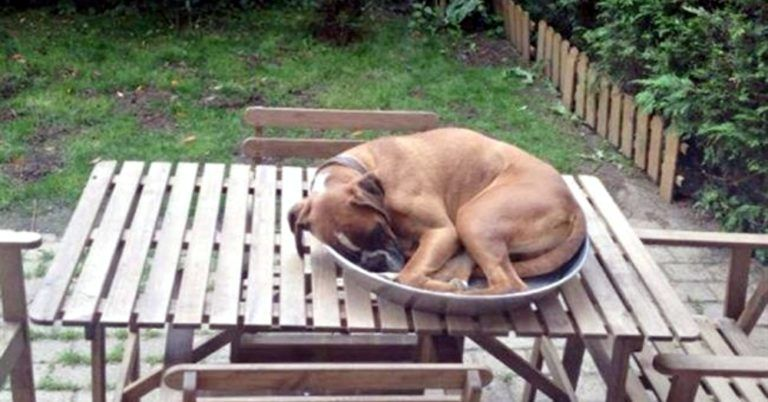 22 Dogs Who Found Interesting Places to Fall Asleep