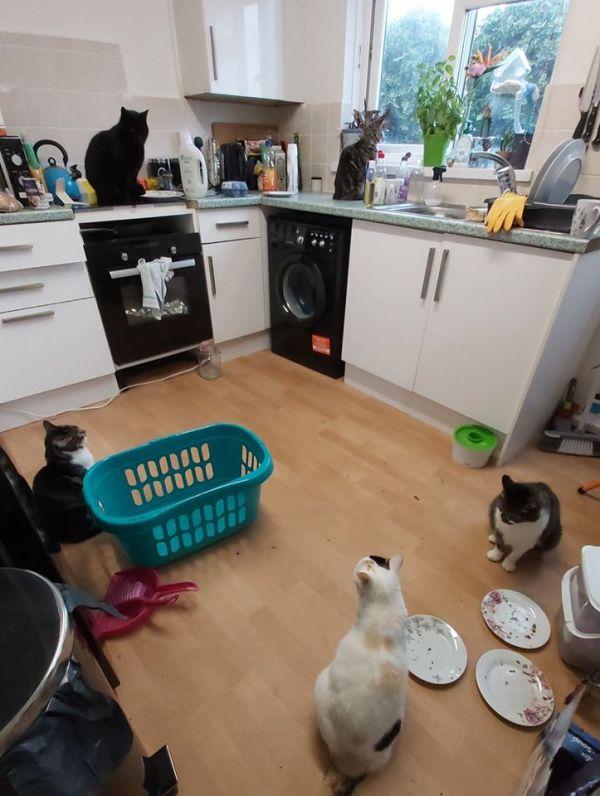 My House, Not My Cat
