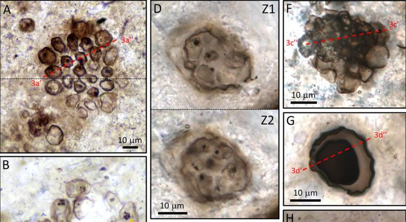 Inside One Billion-Year-Old Cells
