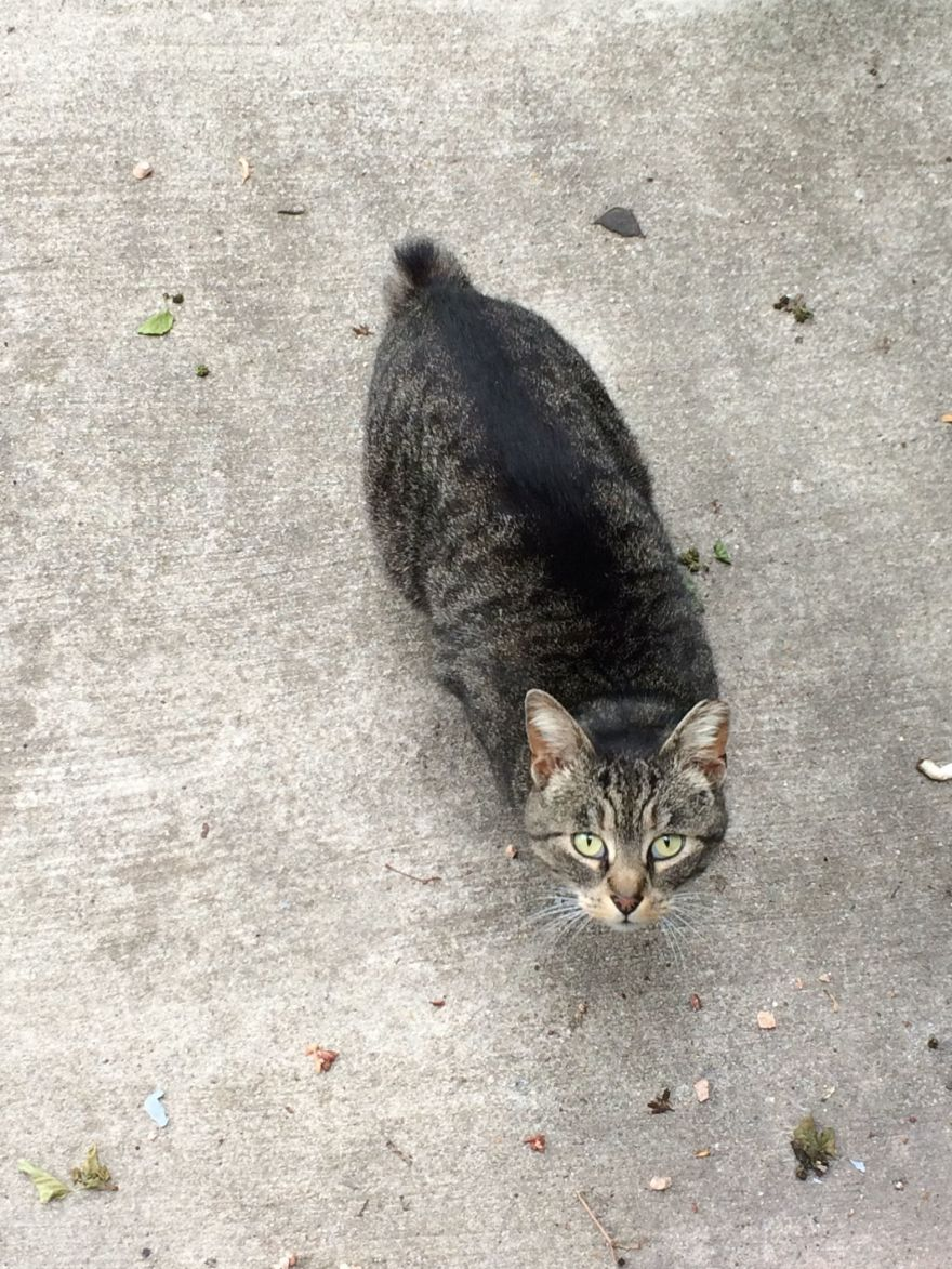 When A Stray Cat Teaches You Lessons About Anxiety