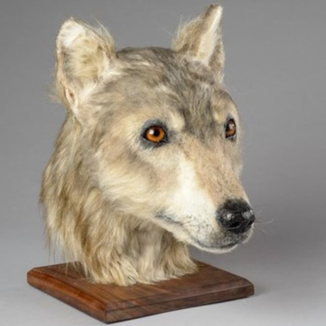 Forensic Artist Recreates Neolithic Dog's Head