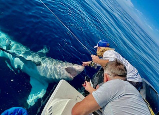 Florida Man Pets Great White Shark
