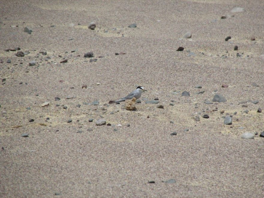 "In Search Of An ""Invisible"" Bird In The Peruvian Desert"