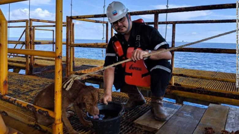 In Thailand: Dog Swims 135 Miles off the Coast