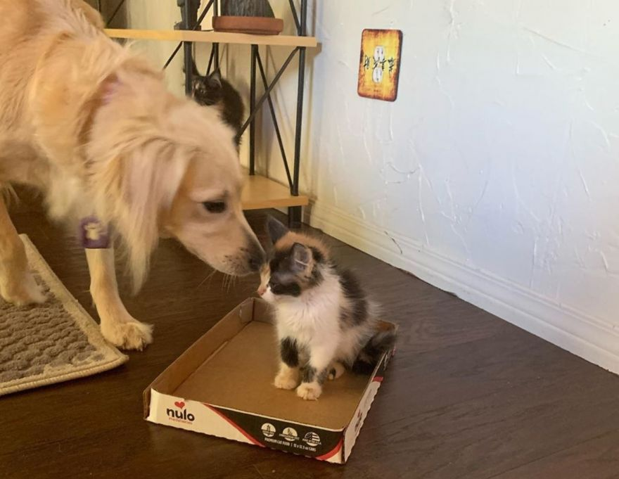dog-comforts-cats-who-lost-their-mother