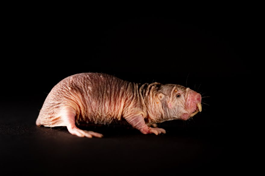 Mole Rat Colonies And Their Respective Dialects